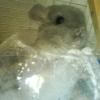 Цеолитная пыль для купания шиншилл, крупная фракция для вычесывания 0-4мм